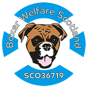 Rescuing and rehoming boxers across Scotland since 2005